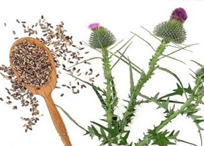 Семена расторопши для чистки печени