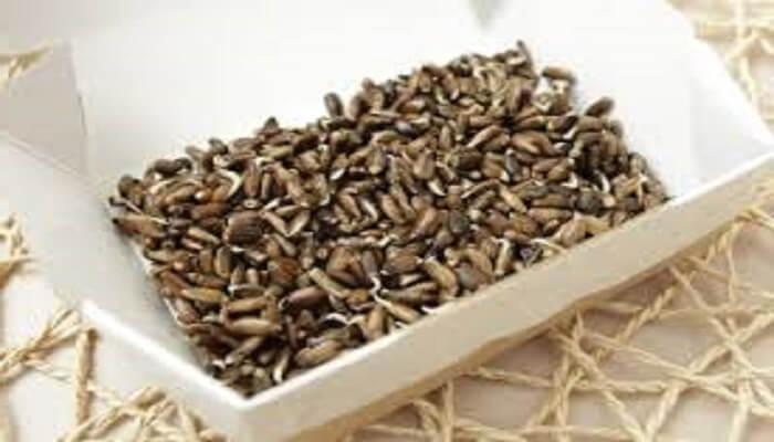 Семя расторопши - фото
