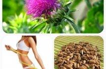 Применение расторопши для похудения и нормализации обмена веществ