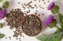 Семена расторопши — лечебные свойства, применение, противопоказания