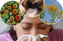 Лечении аллергии расторопшей