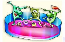 Применение расторопши при дисбактериозе