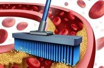 Очищение крови народными средствами в домашних условиях — поможет все та-же расторопша