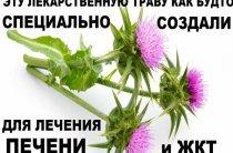 Все формы применения расторопши в лечебных целях