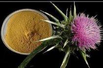 5 вариантов применения расторопши в лечебных целях — полная инструкция со ссылками