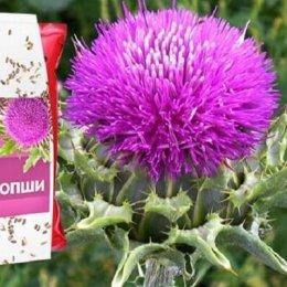 Шрот расторопши–полезные свойства, применение, противопоказания